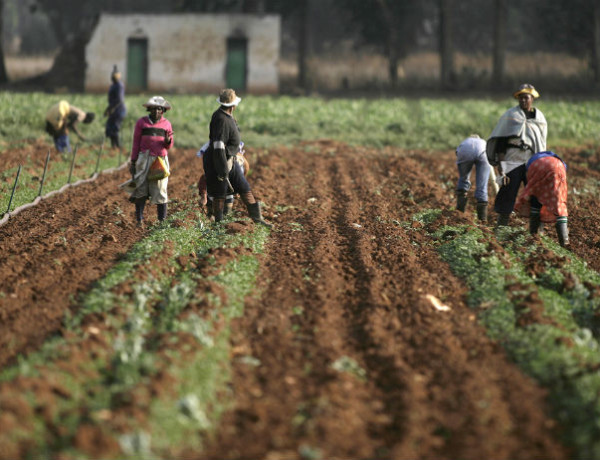 Zimbabwe To Study Post Land Reform Agricultural Production